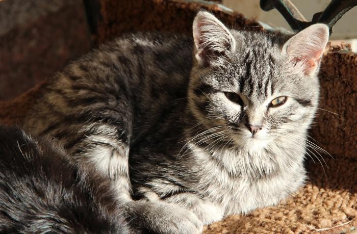 nová čerstvá kočička